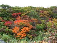 紅葉風景(4)