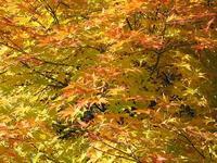 賽の磧付近の紅葉